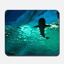 Shark! Mousepad