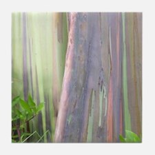 Rainbow Eucalyptus Tree Tile Coaster