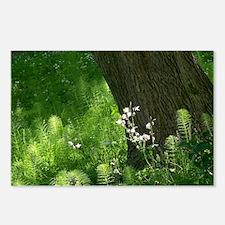 Sunlit Ferns Postcards (Package of 8)