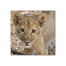 lion cub Sticker
