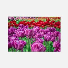 Tulip Field Magnets