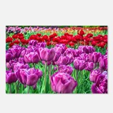 Tulip Field Postcards (Package of 8)