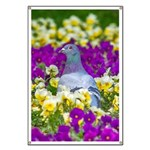 Pigeon and Pansies Banner