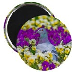 Pigeon and Pansies Magnets