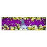 Pigeon and Pansies Bumper Sticker
