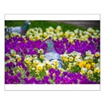 Pigeon and Pansies Posters