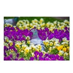 Pigeon and Pansies Postcards (Package of 8)