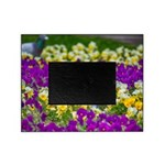 Pigeon and Pansies Picture Frame