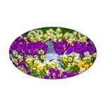 Pigeon and Pansies Oval Car Magnet