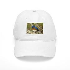 Bluebird Baseball Baseball Cap