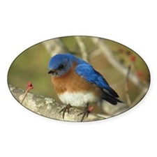 Bluebird Bumper Stickers