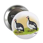 Pied Guineas Button