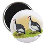 Pied Guineas Magnet