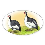 Pied Guineas Oval Sticker