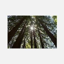 Sequoia Redwood Rectangle Magnet