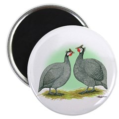 French Guineafowl 2.25