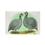 French Guineafowl Rectangle Magnet (100 pack)