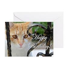 Happy Birthday Cat Greeting Cards