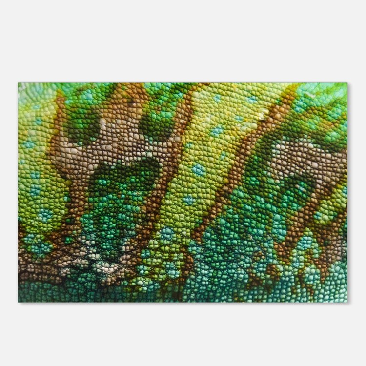 Chameleon Skin Texture Postcards (Package of 8)