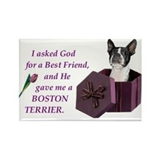 God Gave Me A Boston Terrier Rectangle Magnet
