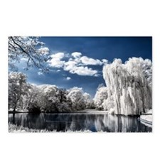 Weeping Willow Infrared Postcards (Package of 8)