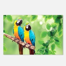 Macaws Postcards (Package of 8)