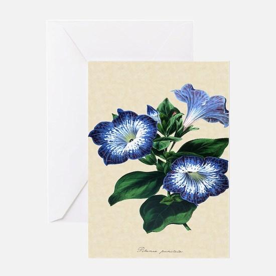Paxton's Petunia punctata Greeting Card