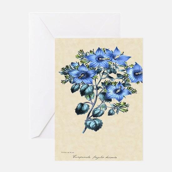 Paxton's Campanula fragilis hirsuta Greeting Card