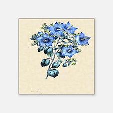 "Paxton's Campanula fragilis Square Sticker 3"" x 3"""