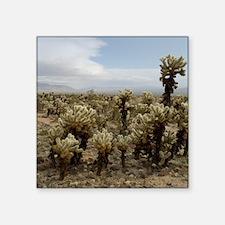 "Cholla Cactus Gardens Square Sticker 3"" x 3"""
