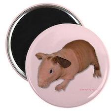 Skinny Pig Magnet
