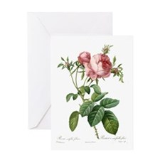 Lovely vintage pink rose Greeting Cards