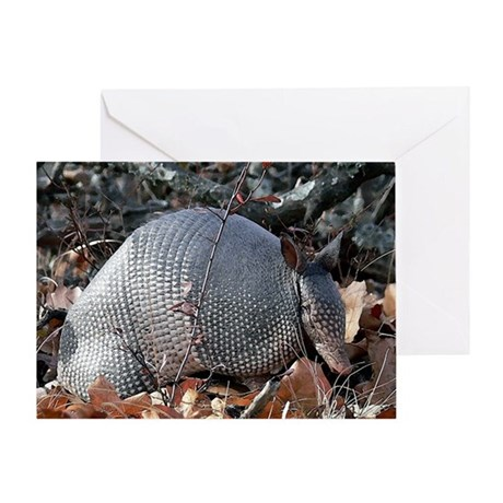 Armadillo Portrait Greeting Cards