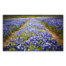 Blue Bonnet Road Decal