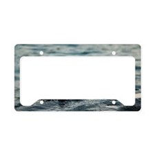 Small marine crabs on a rock License Plate Holder
