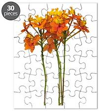 Orchid Epidendrum Puzzle