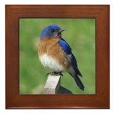 Bluebird Framed Tile