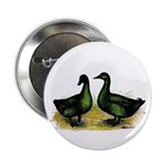 Cayuga Ducks Button