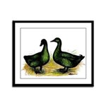 Cayuga Ducks Framed Panel Print