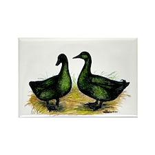 Cayuga Ducks Rectangle Magnet