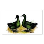 Cayuga Ducks Rectangle Sticker