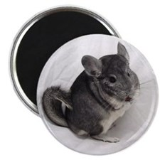 Standard Chinchilla Magnet