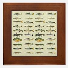 Freshwater Fish Chart Framed Tile