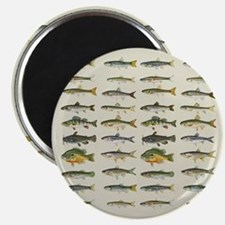 Freshwater Fish Chart Magnet