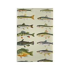 Freshwater Fish Chart Rectangle Magnet