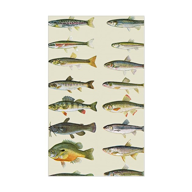 Freshwater fish chart sticker rectangle by sportsnuts for Freshwater fish chart
