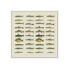 Freshwater Fish Chart Square Sticker 3
