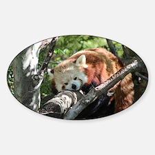 Sleepy Red Panda Sticker (Oval)