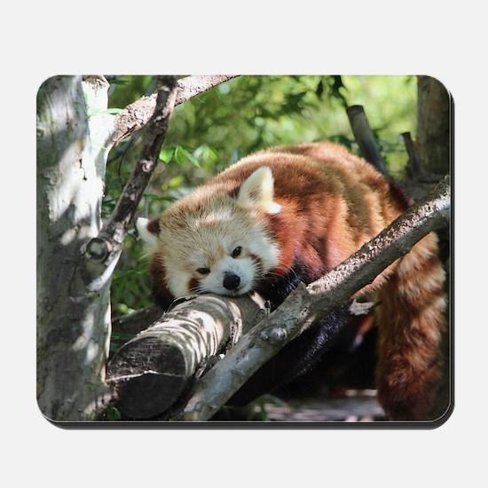 Sleepy Red Panda Mousepad
