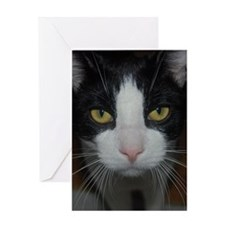 Black and White Cat Greeting Cards